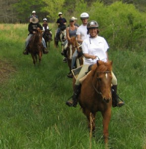 Trail Ride Horse Open Pastures