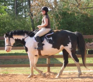 Riding Lesson Horse