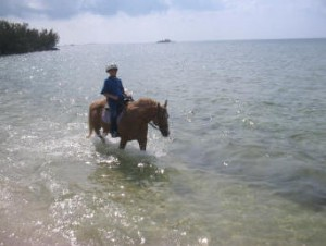 Horses in the Bahamas